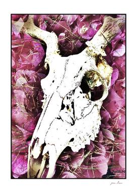Deer Skull VI