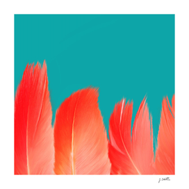 Flamingo Feathers, Colors of Nature