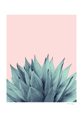 Agave Vibes #12