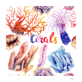 watercolor picture of coral