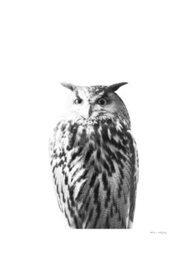 Owl on White #1