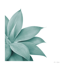 Agave Finesse #1