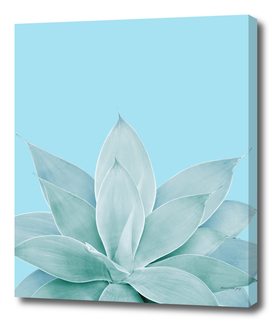 Light Blue Agave #1