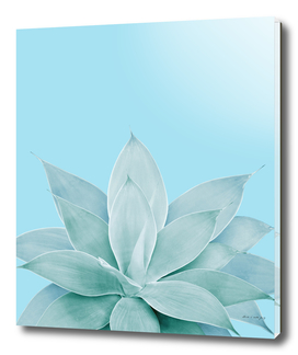 Light Blue Agave #1