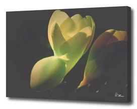 moody spring flower