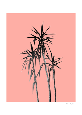Palm Trees - Apricot Blush Cali Summer Vibes #1