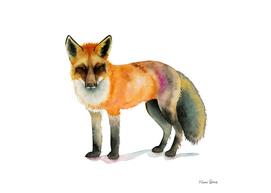 Orange Fox Watercolor Painting