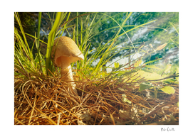 Magic Mushroom  Morning