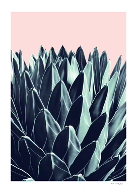 Agave Chic #6 #succulent #decor #art