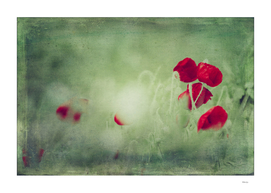 spots of red