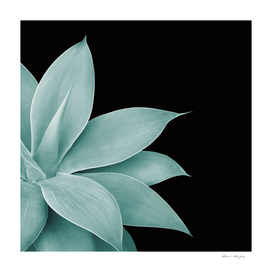 Agave Finesse #4 #tropical #decor #art