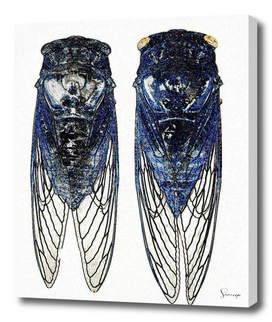Two flies