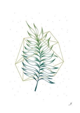 Geometry and Nature I
