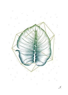 Geometry and Nature II