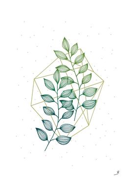 Geometry and Nature III