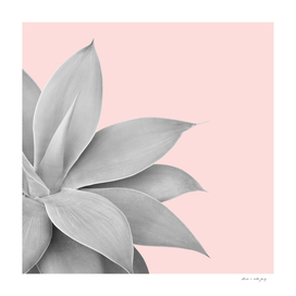 Agave Finesse #5 #tropical #decor #art
