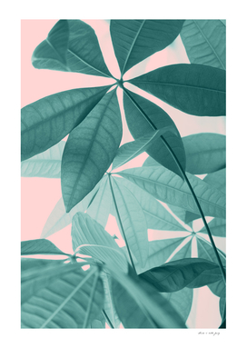Pachira Aquatica #5 #foliage #decor #art