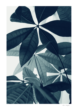 Pachira Aquatica #4 #foliage #decor #art