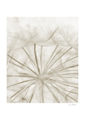 Dandelion Neutral Close-up