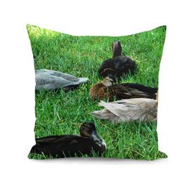 A Bunch Of Quacks