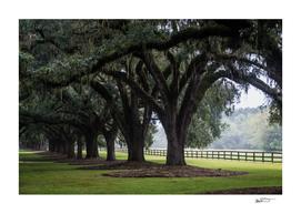 Tree Arch Drive