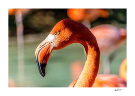 Eye of the Flamingo