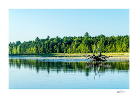 Driftwood Reflection