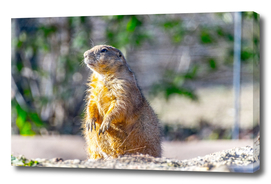 The Good Gopher