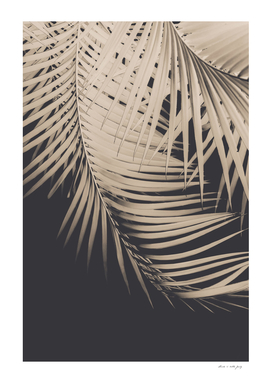 Palm Leaves Sepia Vibes #1 #tropical #decor #art