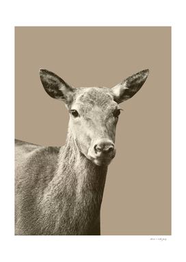 Deer on Sepia #1 #decor #art