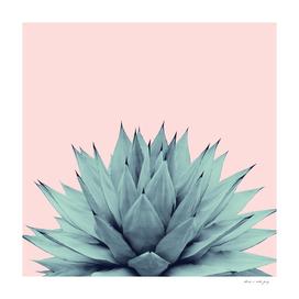 Agave Blush Summer Vibes #1 #tropical #decor #art