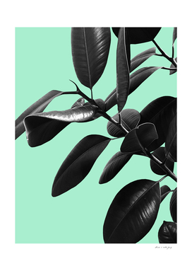 Ficus Elastica Beach Vibes #2 #foliage #decor #art