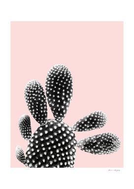 Black Blush Cactus Dream #1 #plant #decor #art