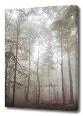 Autumn's Fog