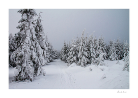 Winter In Owl Mountains