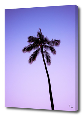 palmtree ver.purple