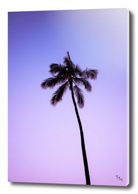 palmtree ver.purple