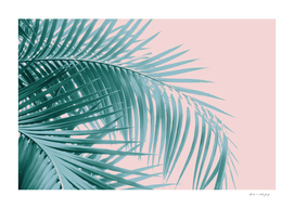 Palm Leaves Blush Summer Vibes #3 #tropical #decor #art