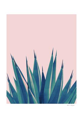 Blush Agave Dream #2 #tropical #decor #art
