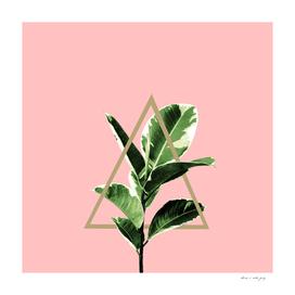 Ficus Elastica Geo Finesse #1 #tropical #foliage #decor #art