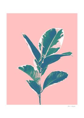 Ficus Elastica Finesse #3 #tropical #foliage #decor #art