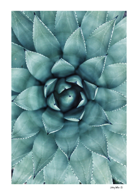 Aloe Green - Agave Art Print