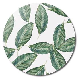 I Leaf for Magnolia