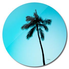 palmtree ver.skyblue