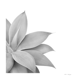 Agave Finesse #6 #tropical #decor #art