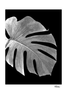 Black and White Monstera Leaf