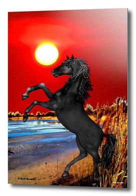 Black Wild Horse at Sunset