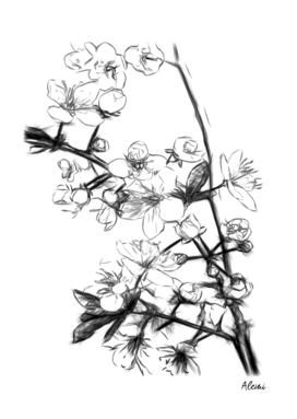 Cherry Blossoms Minimal Drawing