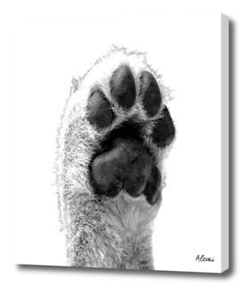 Black and White Dog Paw