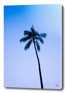 palmtree ver.blue